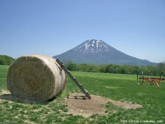ミルク工房からの羊蹄山