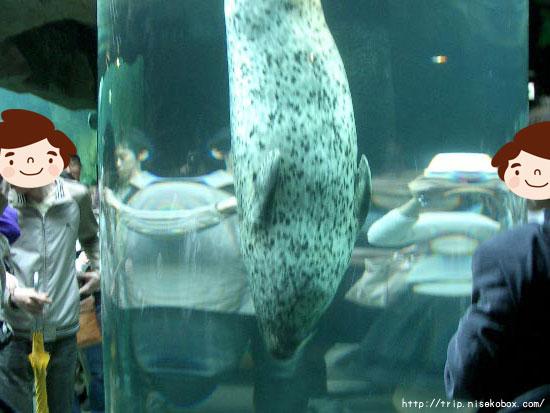 旭山動物園といえばこれ?