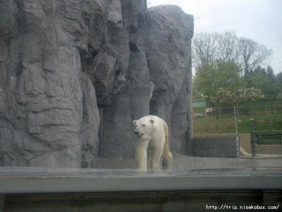 旭山動物園といえば…その2
