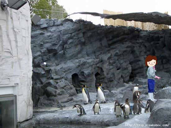 ペンギンもぐもぐタイム