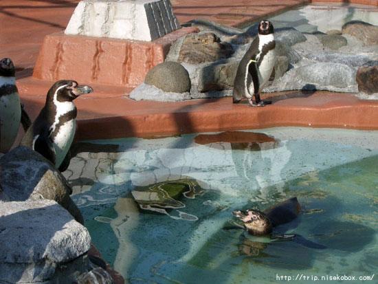 ペンギンコーナー